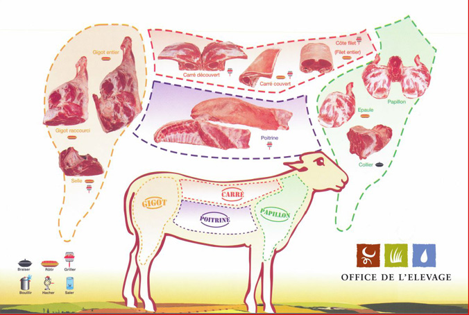 schema-decoupe-viande-agneau-2